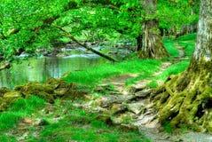 美好的河场面 库存图片
