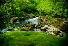 美好的河场面 库存照片