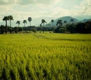 美好的泰国领域 库存照片