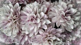 美好的浅粉红色的夏天开花充分的框架背景 库存照片