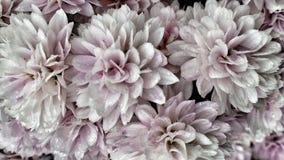 美好的浅粉红色的夏天开花充分的框架背景 免版税库存图片