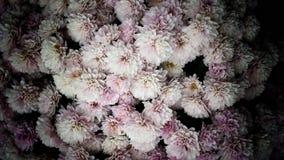 美好的浅粉红色的夏天开花充分的框架背景 库存图片