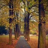 美好的浪漫方式在有五颜六色的树的一个公园 秋天自然本底风景 免版税图库摄影