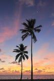 美好的海岸日出 免版税图库摄影