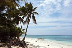 美好的海岸线,海的绿松石视图有棕榈树的, 免版税库存照片