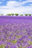 美好的淡紫色领域垂直的看法  库存照片