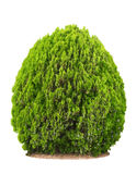 美好的灌木绿色 免版税库存照片