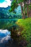 美好的热带杉木森林自然背景 库存照片