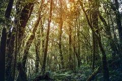 美好的热带雨林自然场面 免版税库存照片