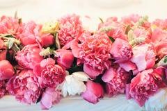 美好的牡丹粉红色 免版税库存图片