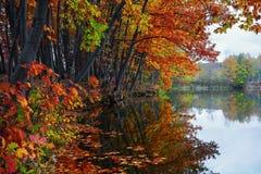 美好的猩红色,黄色,在河海岸的橙树在水中反射叶子何处浮动 免版税库存图片