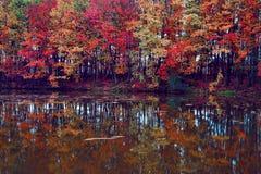 美好的猩红色,黄色,在河海岸的橙树在水中反射 库存图片