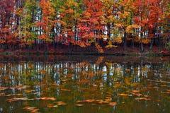 美好的猩红色,黄色,在湖海岸的橙树在水中反射叶子何处浮动 库存图片