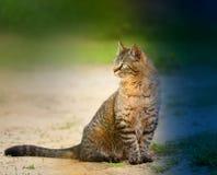 美好的猫开会 免版税库存图片