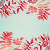 美好的用各种各样的五颜六色的秋天或样式做的秋天季节性组成在土耳其玉色背景,顶视图离开 库存照片