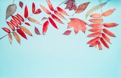 美好的用各种各样的五颜六色的秋天或边界做的秋天季节性组成在土耳其玉色背景,顶视图离开 免版税库存照片