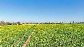 美好的田园诗自然,在油菜油籽种子领域,在农业乡下风景的前移视图上的空中飞行 影视素材