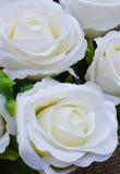美好的白玫瑰背景 免版税库存图片