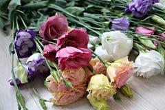 美好的秀丽绽放花束颜色creen梦想植物群花园 库存照片