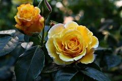 美好的秀丽绽放花束颜色creen梦想植物群花园 免版税库存照片