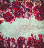 美好的秋天伯根地开花背景,顶视图 花卉布局或插件边框 秋天菊花 免版税库存图片