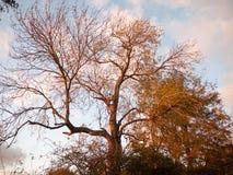 美好的秋天光秃的分支没有叶子乡下太阳集合 免版税图库摄影