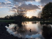 美好的秋天光秃的分支没有叶子乡下河太阳s 免版税库存照片