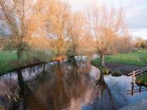 美好的秋天光秃的分支没有叶子乡下河太阳s 库存图片
