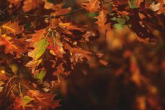 美好的秋天公园风景,细节 库存图片