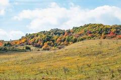 美好的秋天农村场面 库存照片
