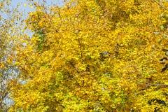 美好的秋天农村场面 免版税库存照片