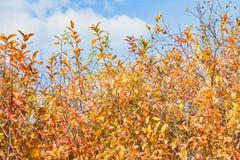 美好的秋天农村场面 图库摄影