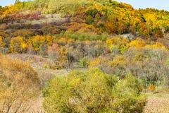 美好的秋天农村场面 库存图片