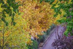 美好的秋天叶子颜色 库存照片
