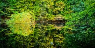 美好的秋天在一个小森林池塘上色了树反映 免版税库存图片