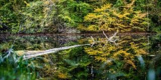 美好的秋天在一个小池塘上色了树反映 漂浮水表面上的一棵老树 库存照片