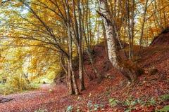 美好的秋天在森林里 图库摄影