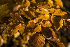 美好的秋天场面,山的五颜六色的森林 库存照片