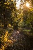 美好的秋天场面,山的五颜六色的森林 免版税库存照片