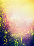美好的秋天或夏天自然背景用草本、草和花在庭院或公园在日落和bokeh点燃 库存图片
