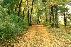 美好的秋天森林秋天场面 秋季美丽的公园 绿树林 免版税库存照片