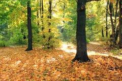 美好的秋天森林秋天场面 秋季美丽的公园 绿树林 免版税库存图片