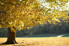 美好的秋天森林颜色 免版税库存照片
