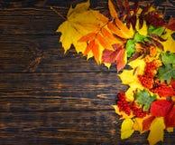 美好的秋天背景用花揪和黄色,红色叶子 库存照片
