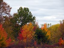 美好的秋天色的树 库存照片