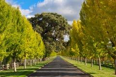 美好的秋天色的结构树 免版税图库摄影