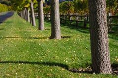 美好的秋天色的结构树 免版税库存图片