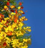 美好的秋天边界 免版税库存照片