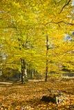 美好的秋天颜色的森林在一个晴天 库存照片