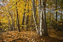 美好的秋天颜色的森林在一个晴天 免版税库存图片